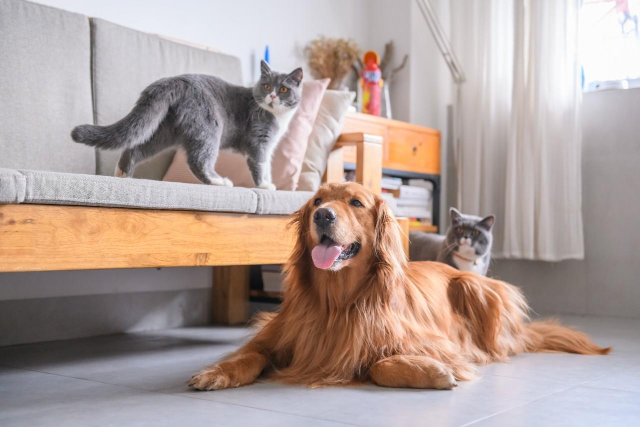 Choroby-ktrymi-zarazisz-si-od-psa-lub-kota-