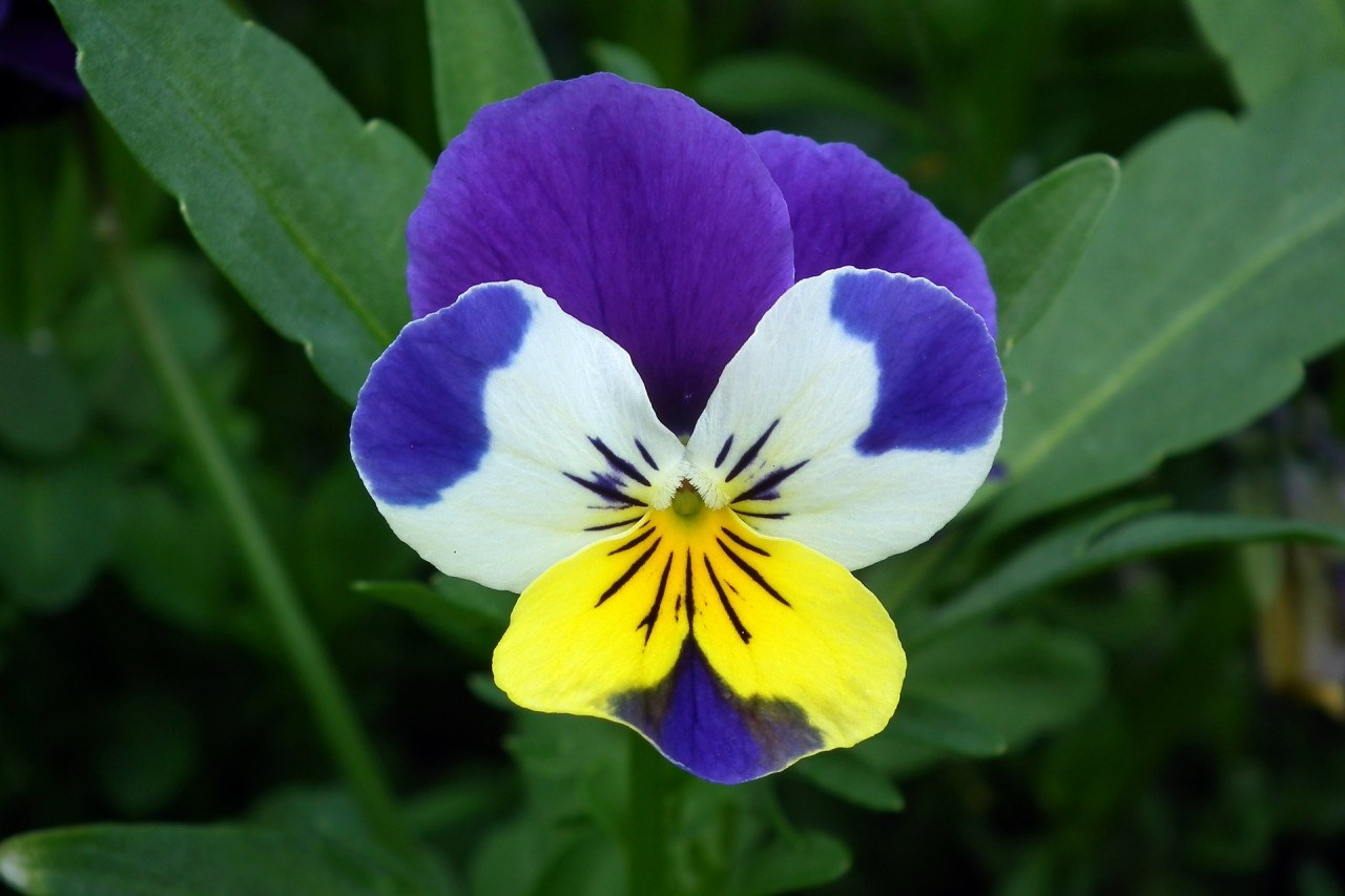 kwiat-1