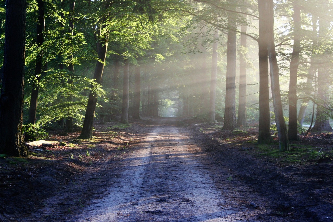 Shinrin-yoku, czyli leśna terapia