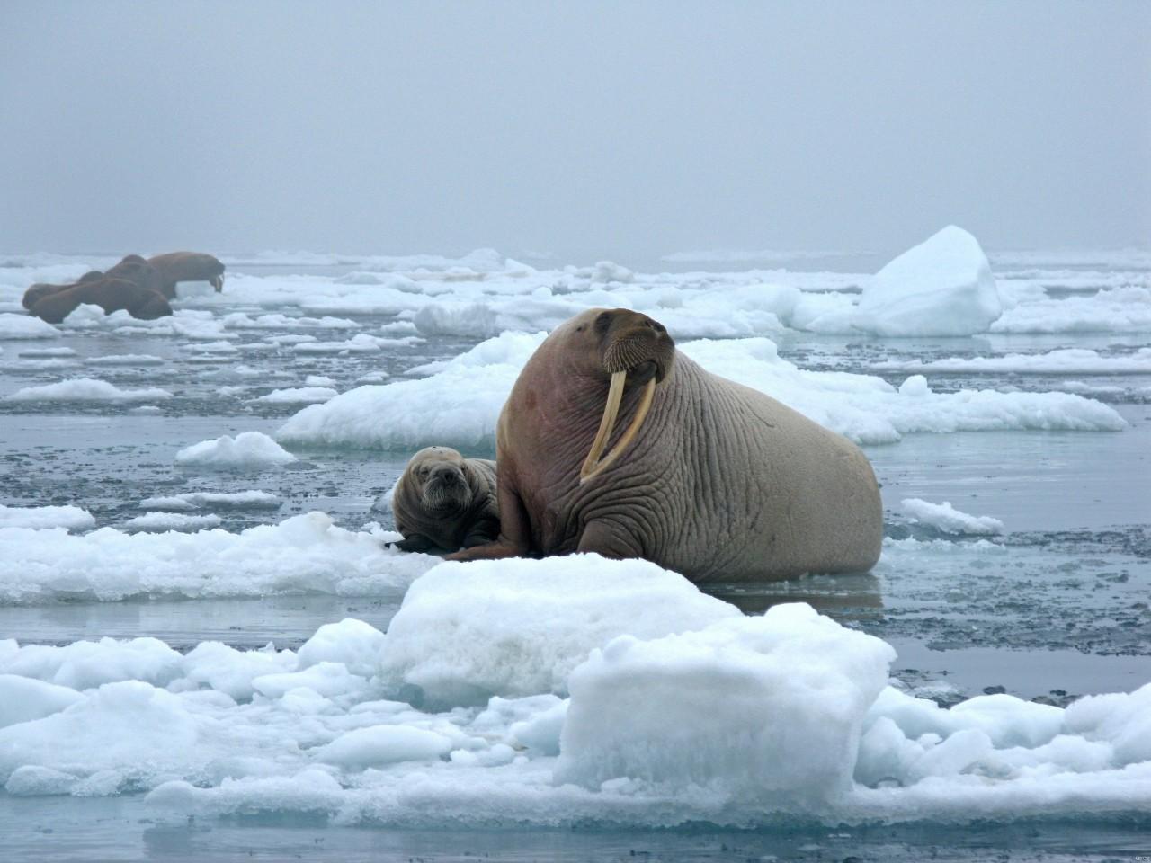 Zimna-woda-zdrowia-doda